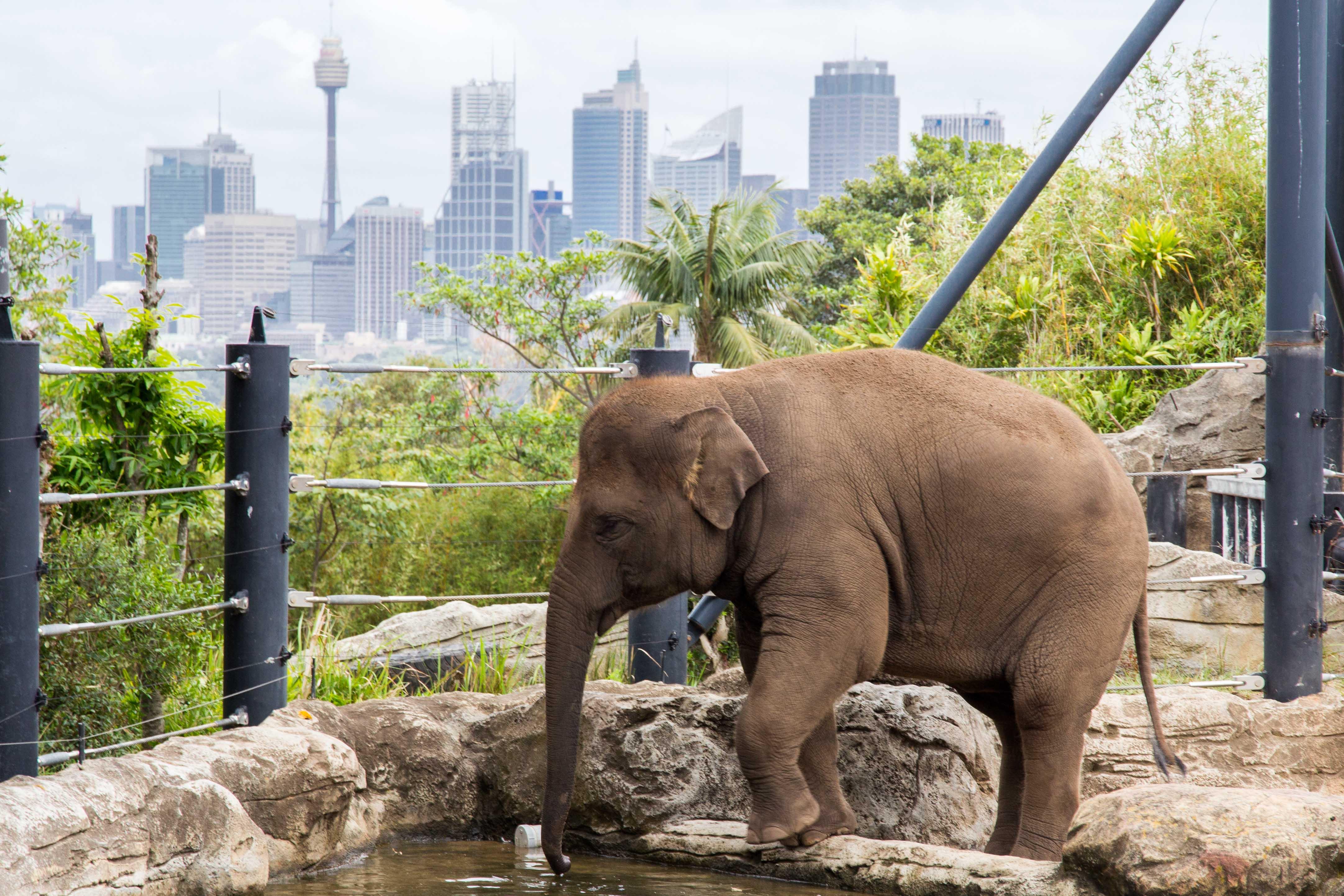 Top 10 Tips For Visiting Taronga Zoo Living Ez
