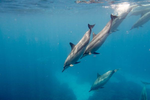 Best Places to See Dolphins on the Big Island - Living EZ