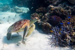 Our Favorite Snorkeling – Great Barrier Reef Edition