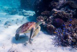 Underwater Photography Lightroom Edits